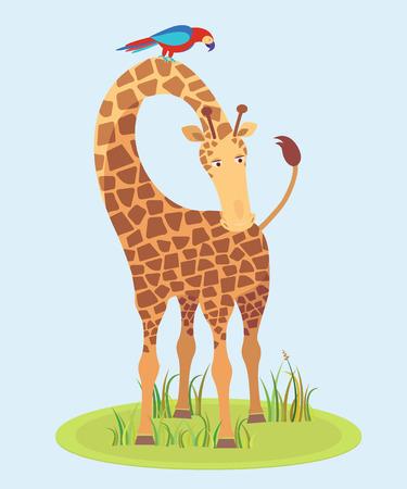 camelopardalis: Beautiful Giraffe on grass looking at us, vector illustration