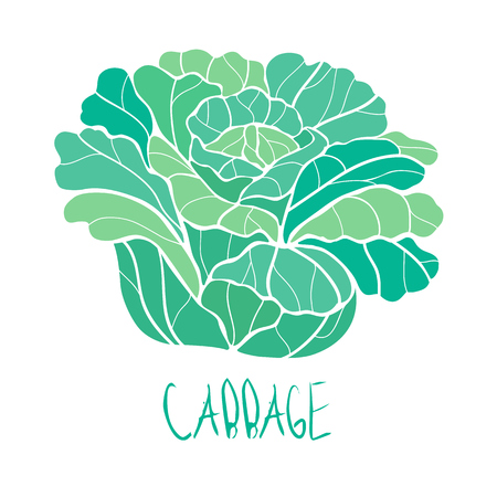 stylized vector paint hand drawn picture of cabbage Illustration
