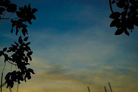 sillouette: Sillouette leaves with colorful sky. Stock Photo