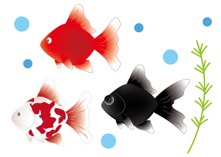 Goldfish three type