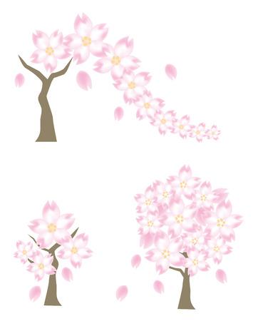 Cherry-Blossom drei Variation-Frühling Bild von Vector Standard-Bild - 75876143
