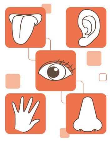 Five senses set Çizim