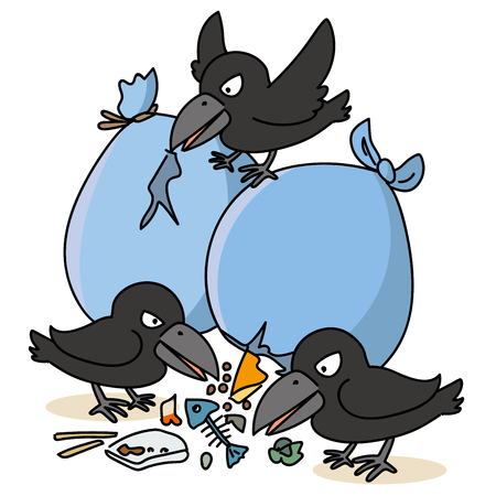 Crow and garbage problem