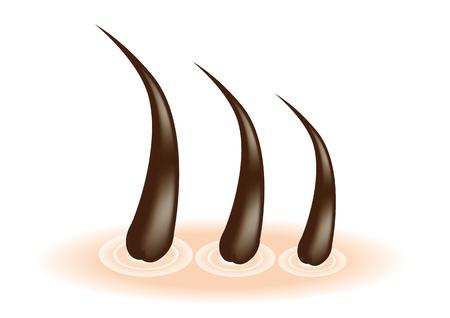Vector image material of hair follicle