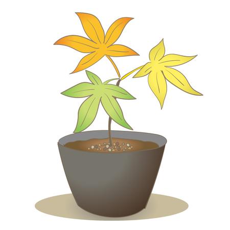 Maple seedling-Three colored leaves Illustration