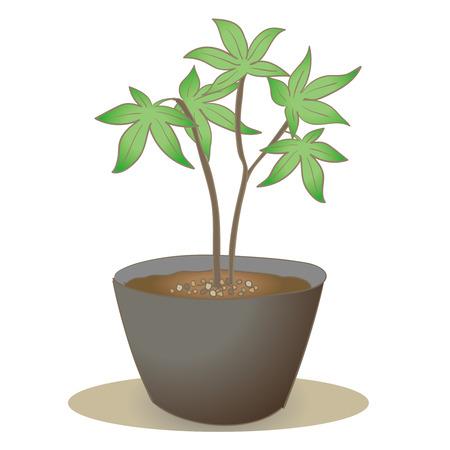 Maple seedling-Bonsai style Illustration