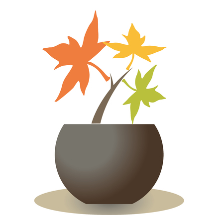 Maple seedling-Bonsai Stok Fotoğraf - 121739176