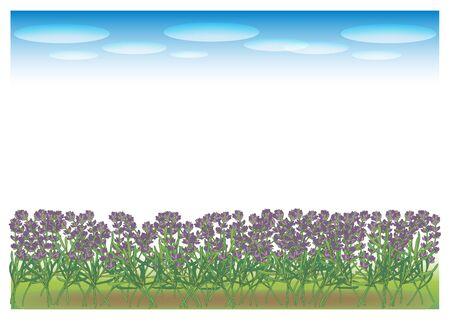 Landscape of lavender field Illustration