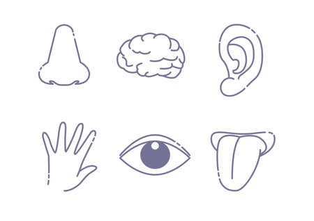 Five senses and brain image - Line drawing icon set