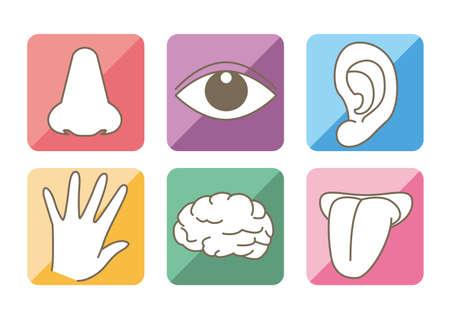 Five senses and brain image - Colorful icon set Ilustração