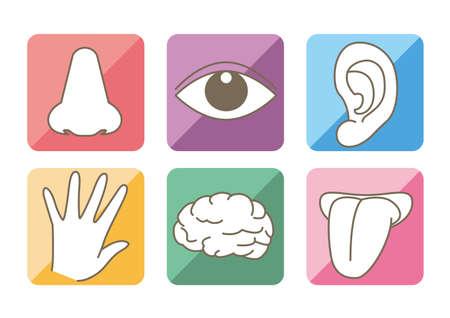Five senses and brain image - Colorful icon set