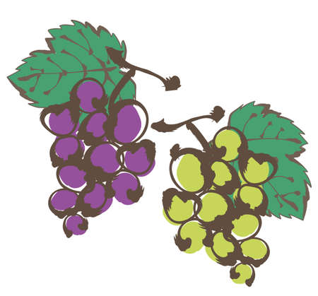 Grapes written with a brush - grape picking image -