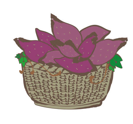 Autumn taste - Sweet potatoes in the basket Ilustração