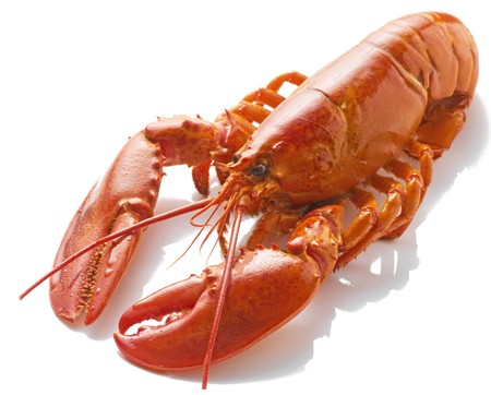 A large cooked red Lobster isolated on white background with shadow Stock Photo