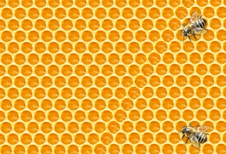 Worker Bees on Honeycomb photo