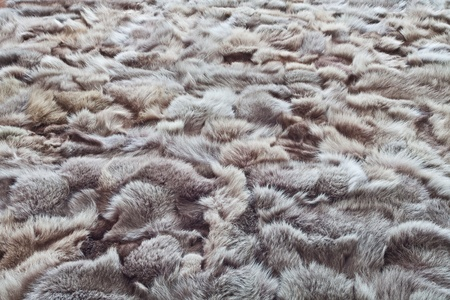 Background or texture image of fur. In perspective Stock Photo - 12975514