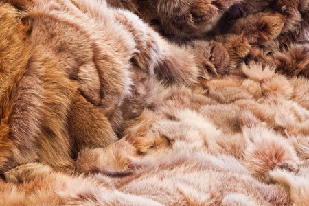 Background or texture image of fur. In perspective photo