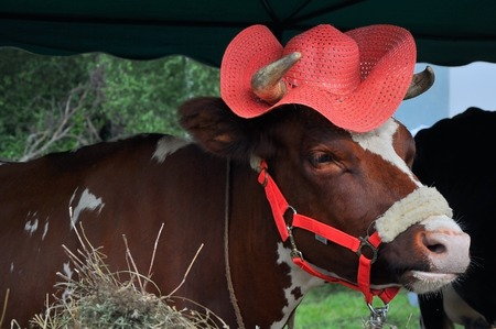 cow in a red hat at a fair Stock Photo