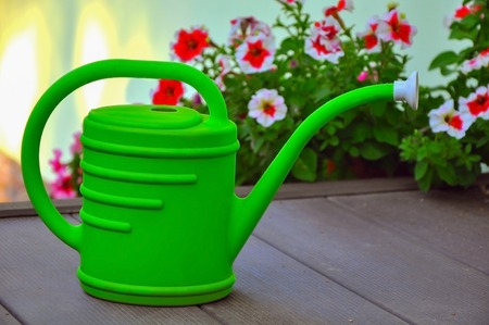 petunias: green watering can against the background of the blossoming petunias Stock Photo