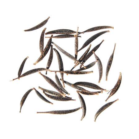 Seeds of garden cosmos (Cosmos bipinnatus) isolated on white background Stock Photo