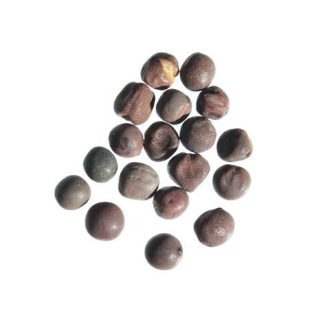 Seeds of Sweet pea (Lathyrus odoratus) isolated on white background
