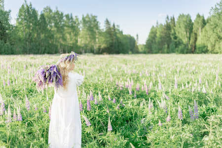 A girl with a bouquet of flowers over her shoulder in a white dress and a flower wreath walks back along the flower field, in the flower field of lupins. the girl and Lupine field backs away
