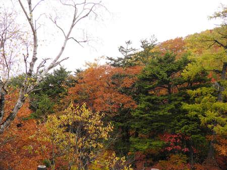 Autumn in nikko Stock Photo - 17225858