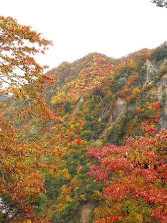 Autumn in nikko Stock Photo - 17225859