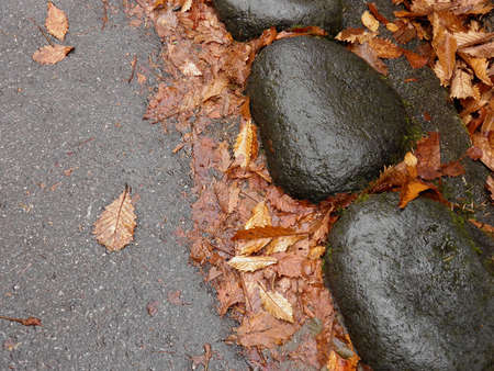 Autumn in nikko photo