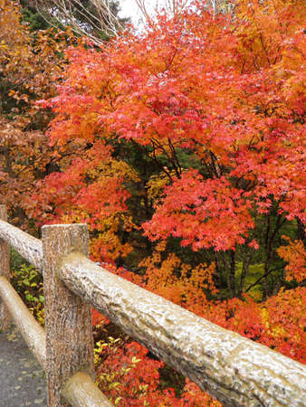 Autumn in nikko photo