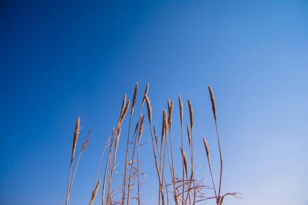 Tall thick grass earth against blue sky background