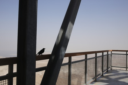 judean hills: Small crow sitting on the fence in Israel, birds and animals in the desert, holy land, nature of Israel, dangerous mountains, hills and canyons, tourism in israel