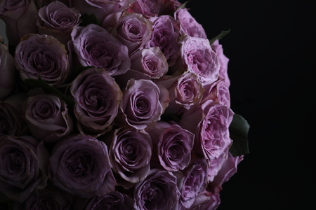 Bouquet of violet roses. Close up 版權商用圖片