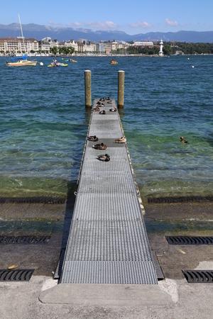 Ducks, on a wooden pier