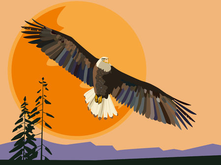 Eagle flies against the setting sun. Vector drawing