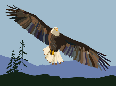 The eagle soars. Vector drawing