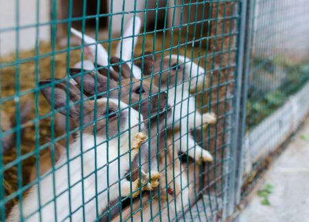 Cute small colored rabbits waiting for food in the cell outside. Selective focus.