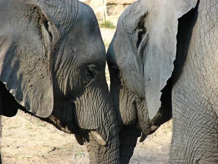 Elephants love