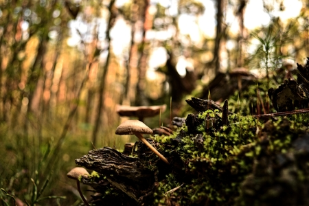 uneatable: Mushrooms seen in the forest in Poland.