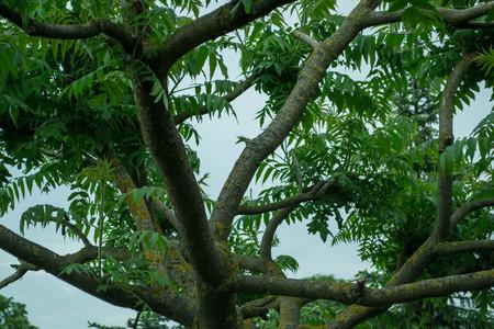 las ramas de los árboles