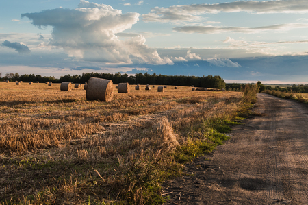 Straw or hay stacked in a field after harvesting. Stock Photo