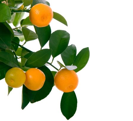 Small orange on tree