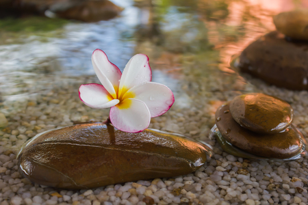 florae: Touching nature with relaxing and peaceful with flower plumeria or frangipani decorated on water and pebble rock in zen style for spa meditation mood