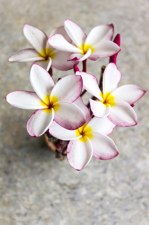 florae: Top view of lovely flower plumeria bunch arrangement in mini vase put on classic marble table