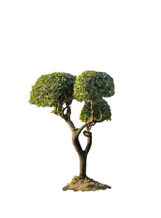 medium size: Clipping path isolated medium size fresh bush tree for decorate landscape view Stock Photo