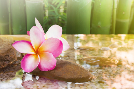 Close up of fresh beautiful sweet pink flower plumeria and mini lovely canal with bamboo tree background with relaxing and meditation or aroma spa mood Stock Photo
