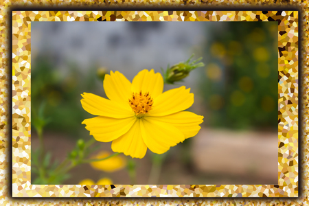 crystallize: Lovely single yellow flower cosmos in crystallize pattern frame Stock Photo