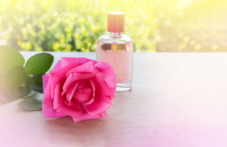 single pink rose inconcept sweet aroma love in romantic colour tone Stock Photo