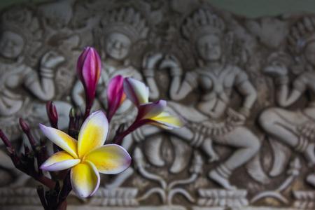 florae: (Still life tone) beautiful flower plumeria or frangipani in Asia  boutique style background