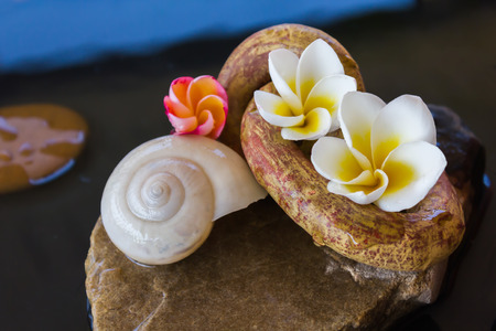 florae: Beautiful flower plumeria or frangipani and shell on water for spa meditation mood